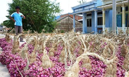 Điểm lại những nông sản khiến nông dân điêu đứng trong 3 tháng qua - anh 4