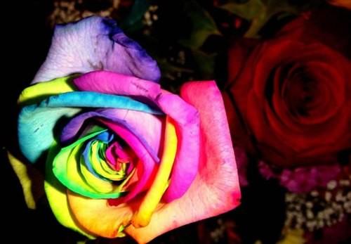 Tử vi 12 cung Hoàng đạo tuần mới (4/5/2015 - 10/5/2015) - anh 2