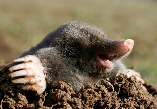 Những sự thật bất ngờ về các loài động vật có thể bạn chưa từng nghe tới - anh 2
