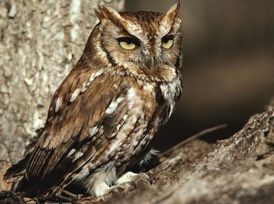 Những sự thật bất ngờ về các loài động vật có thể bạn chưa từng nghe tới - anh 6