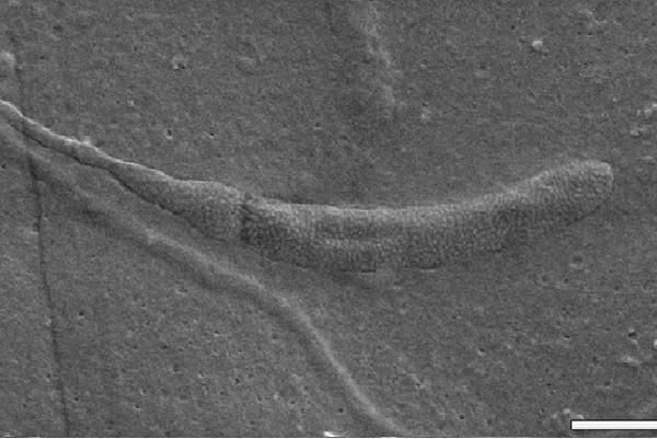 Những hóa thạch kỳ lạ nhất hành tinh - anh 1