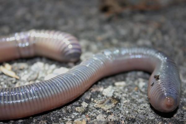 Những hóa thạch kỳ lạ nhất hành tinh - anh 2