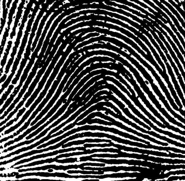 Xác định độ thông minh và tính cách thông qua dấu vân tay - anh 6