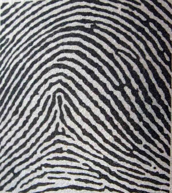 Xác định độ thông minh và tính cách thông qua dấu vân tay - anh 7