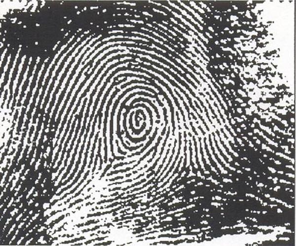 Xác định độ thông minh và tính cách thông qua dấu vân tay - anh 9