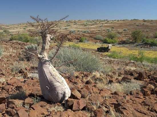 Những loài cây kỳ lạ nhất hành tinh - anh 2