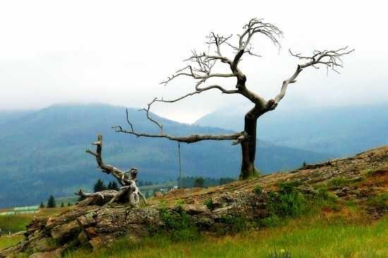 Những loài cây kỳ lạ nhất hành tinh - anh 7