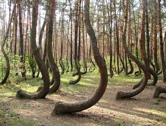 Những loài cây kỳ lạ nhất hành tinh - anh 6