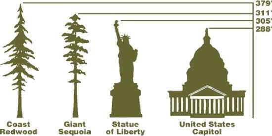 Những loài cây kỳ lạ nhất hành tinh - anh 4