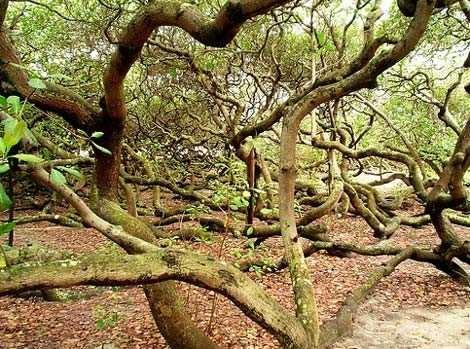 Những loài cây kỳ lạ nhất hành tinh - anh 1
