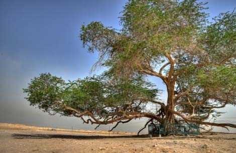 Những loài cây kỳ lạ nhất hành tinh - anh 3