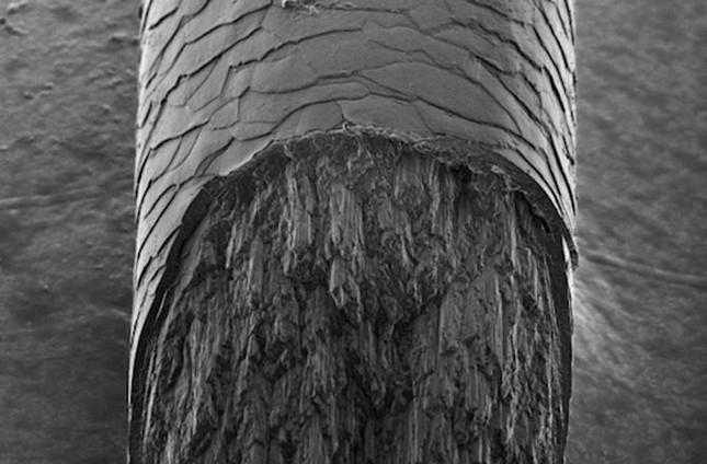 Tìm thấy thành phần bí ẩn của tóc - anh 1