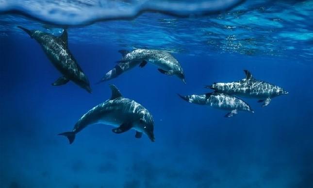 9 động vật thông minh nhất hành tinh - anh 2