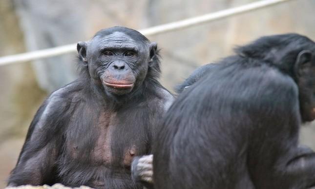 9 động vật thông minh nhất hành tinh - anh 5