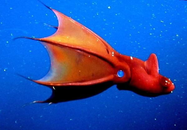 """5 loài """"quái vật"""" biển có thể khiến bạn """"hết hồn"""" - anh 1"""
