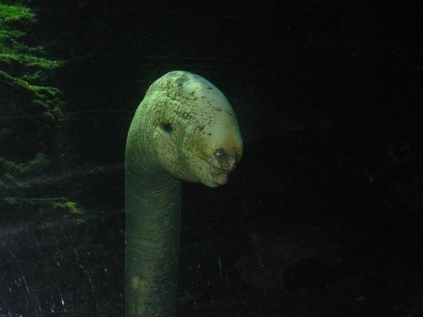"""5 loài """"quái vật"""" biển có thể khiến bạn """"hết hồn"""" - anh 3"""