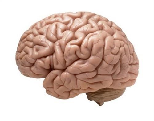 10 điều thú vị về bộ não con người có thể bạn chưa biết - anh 3