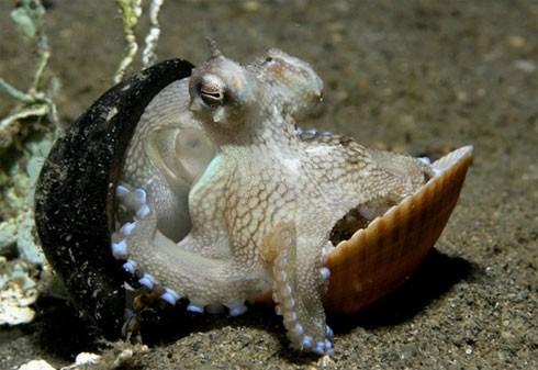 10 điều bí ẩn dưới đáy đại dương gây sốc - anh 1