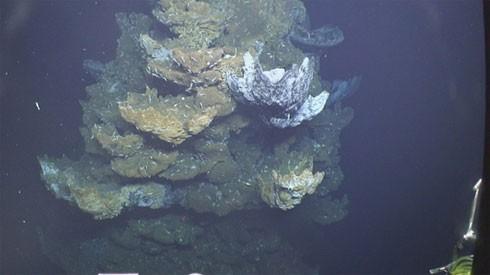 10 điều bí ẩn dưới đáy đại dương gây sốc - anh 5