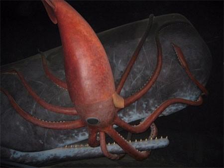 10 điều bí ẩn dưới đáy đại dương gây sốc - anh 8