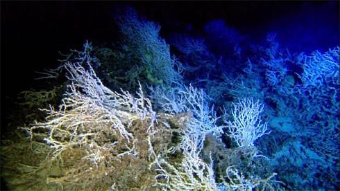 10 điều bí ẩn dưới đáy đại dương gây sốc - anh 9