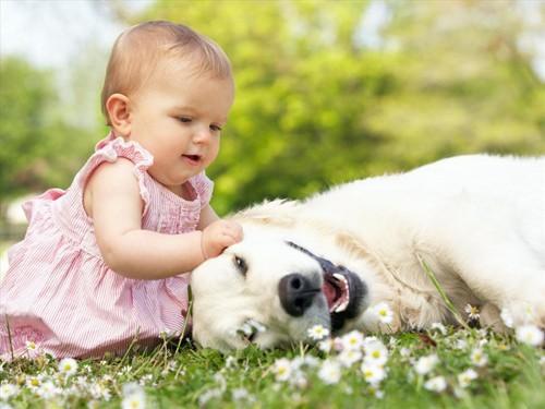 Kỹ năng sống: Làm sao để chơi an toàn với thú cưng? - anh 2