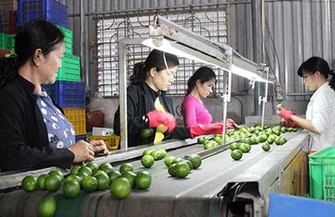 Trái cây đặc sản Việt vào Mỹ, Nhật - anh 1