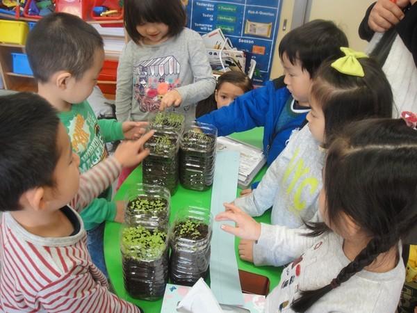 Cận cảnh một giờ học về thiên nhiên của trẻ mẫu giáo Nhật - anh 1