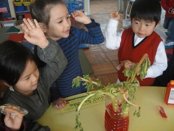 Cận cảnh một giờ học về thiên nhiên của trẻ mẫu giáo Nhật - anh 15