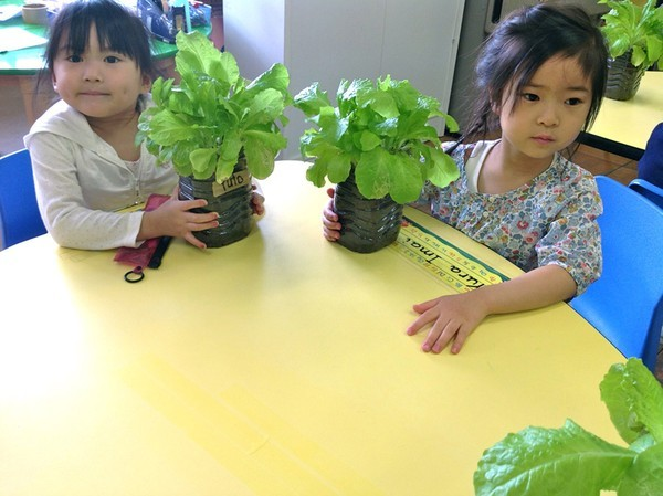 Cận cảnh một giờ học về thiên nhiên của trẻ mẫu giáo Nhật - anh 4