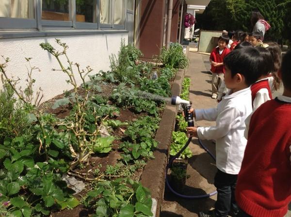 Cận cảnh một giờ học về thiên nhiên của trẻ mẫu giáo Nhật - anh 5