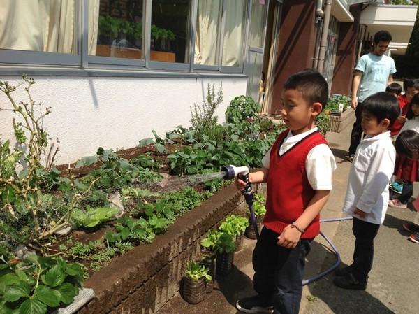 Cận cảnh một giờ học về thiên nhiên của trẻ mẫu giáo Nhật - anh 6