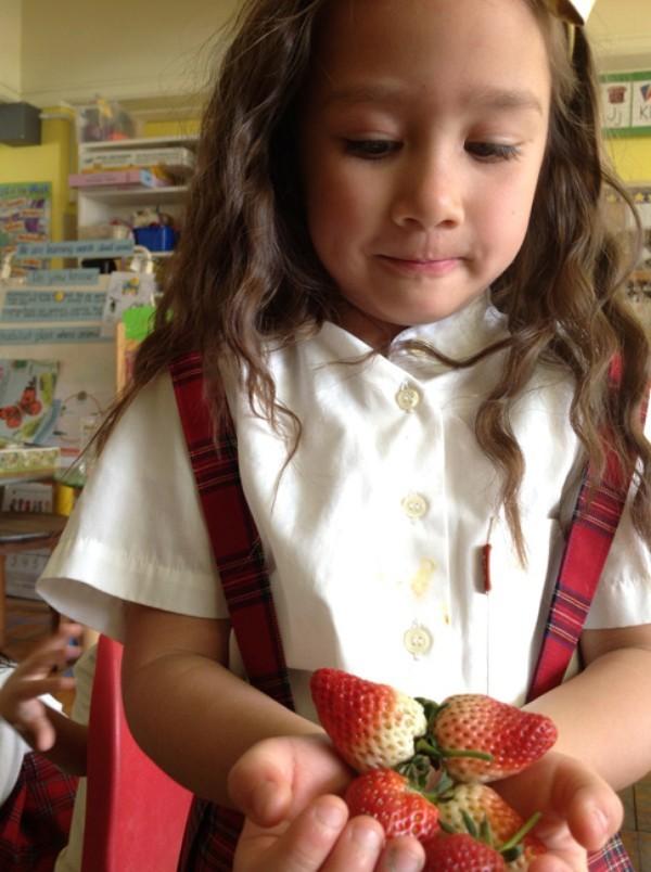 Cận cảnh một giờ học về thiên nhiên của trẻ mẫu giáo Nhật - anh 7