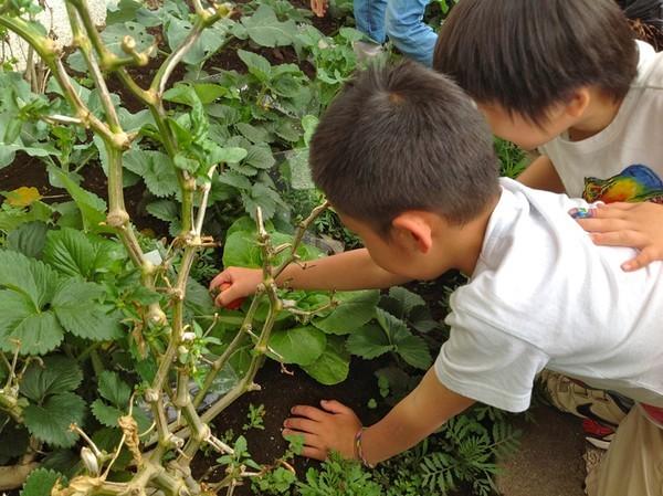 Cận cảnh một giờ học về thiên nhiên của trẻ mẫu giáo Nhật - anh 8