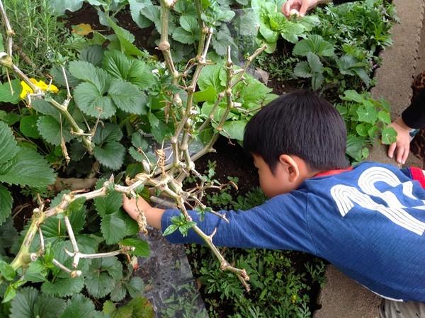 Cận cảnh một giờ học về thiên nhiên của trẻ mẫu giáo Nhật - anh 9