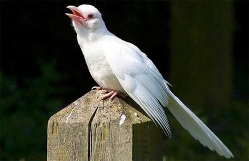 Trắc nghiệm Kokology: Chú chim sẽ đổi sang màu gì? - anh 3