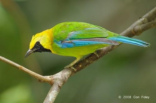 Trắc nghiệm Kokology: Chú chim sẽ đổi sang màu gì? - anh 4