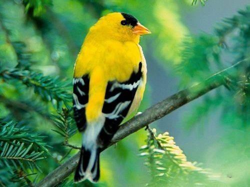 Trắc nghiệm Kokology: Chú chim sẽ đổi sang màu gì? - anh 5