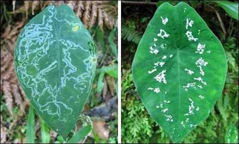 Những phát hiện bất ngờ về trí tuệ của động, thực vật - anh 7