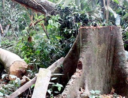 Chết tức tưởi vì đổ xô đi khai thác ươi ở miền Trung - anh 2