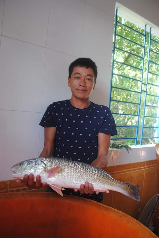 Giải mã vì sao cá sủ vàng ở biển Việt Nam có giá 1 tỷ/con - anh 2