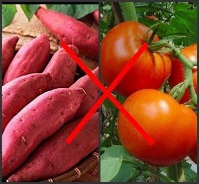 Những loại thực phẩm tuyệt đối không kết hợp với nhau - anh 5