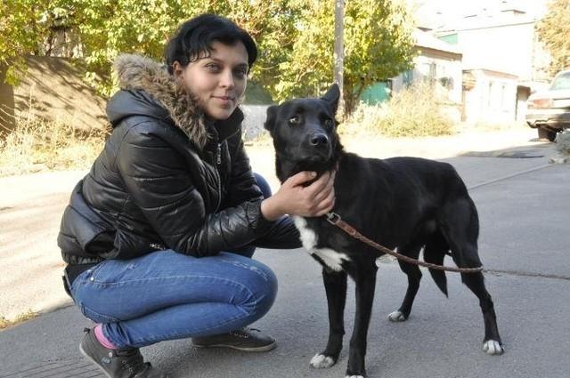 Cảm động chú chó đi bộ 300 km để trở về với chủ - anh 1
