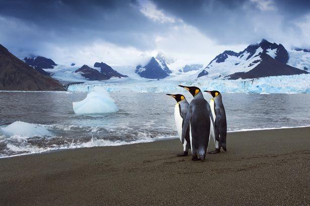Chim cánh cụt có thể nắm giữ bí mật giúp ngăn máy bay rơi - anh 1