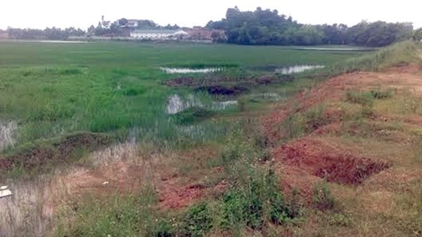 Phú Thọ: Cán bộ bán khống hơn 160 lô đất - anh 1