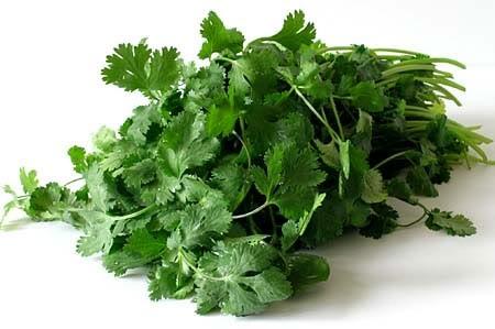6 bài thuốc chữa bệnh hiệu quả từ rau mùi - anh 1