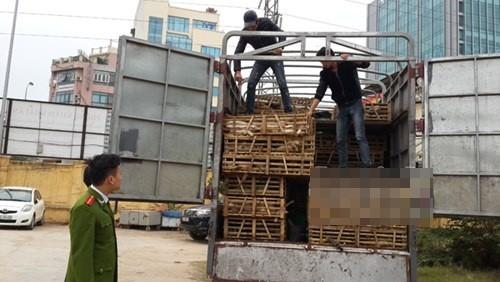 Phát hiện xe tải vận chuyển 3 tấn mèo nhập lậu từ Trung Quốc về Hà Nội - anh 1