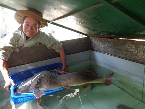 """Ngư dân câu được cá lăng """"khủng"""" dài 1m, nặng 20kg - anh 2"""