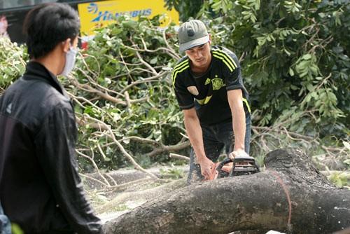 Vụ thay thế 6.700 cây xanh ở Hà Nội: Tổng Thanh tra CP yêu cầu làm nghiêm việc chặt cây - anh 1
