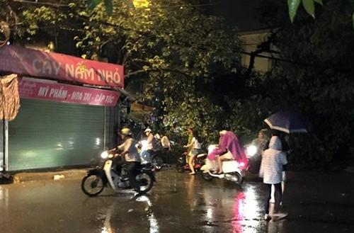 Hà Nội: Xà cừ bất ngờ bật gốc, 1 nữ sinh bị thương - anh 1